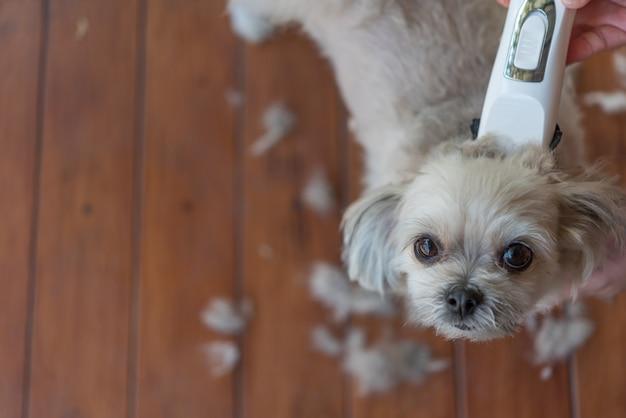 Toilettage et coupe de fourrure de chien par humain avec tondeuse