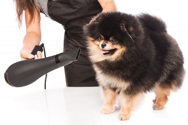 Toiletter un chien