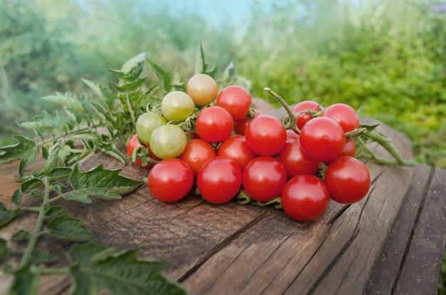Tomates cerises sur la vieille table en bois. tomates cerises sur la vigne
