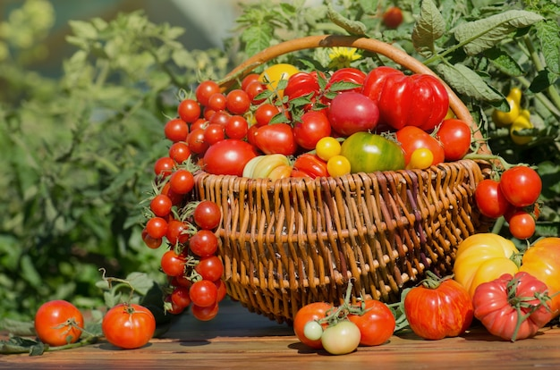 Tomates dans un panier sur fond flou abstrait bokeh.