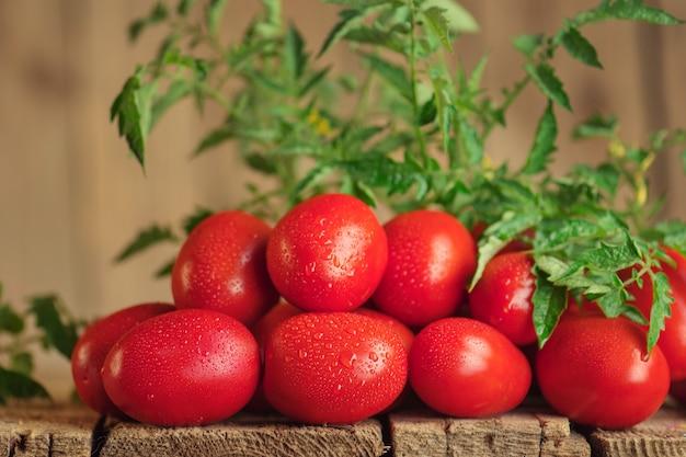 Tomates italiennes aromatiques fraîches