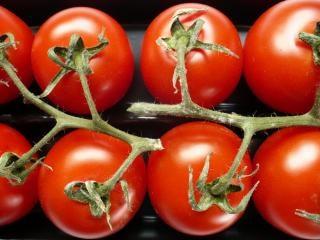 Tomates, de nombreux