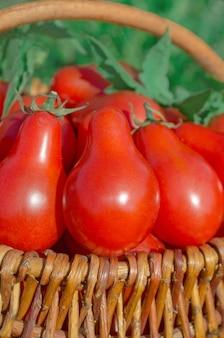 Tomates poires mûres fraîches dans un panier dans le jardin