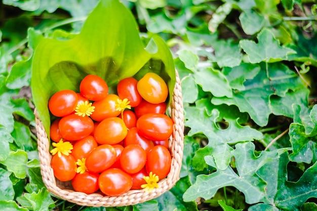 Tomates rouges fraîches dans un panier en bambou