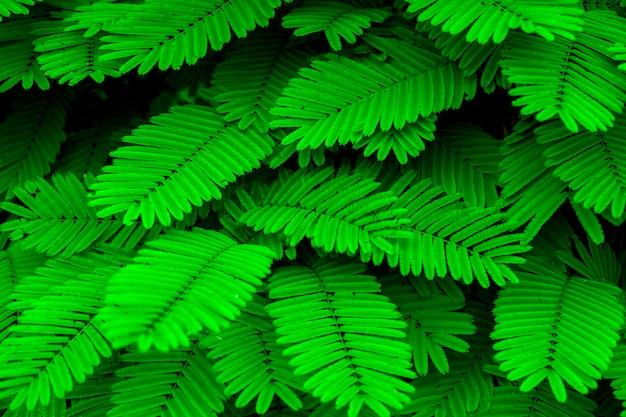 Ton mini feuille verte dans la nature