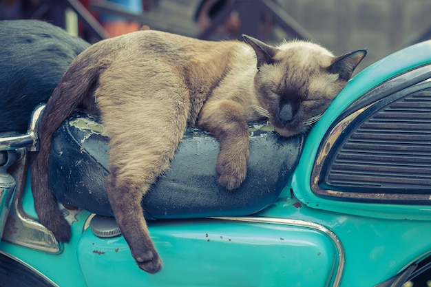 Ton vintage d'un chat dormant sur une moto