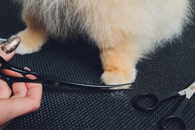Tondeuse professionnelle taillant les pattes de chien à poils longs