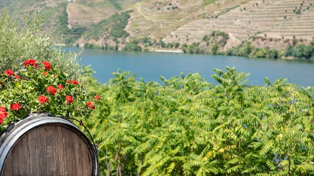 Tonneau de vin sur un terrain planté de vignes dans les montagnes avec le fleuve douro