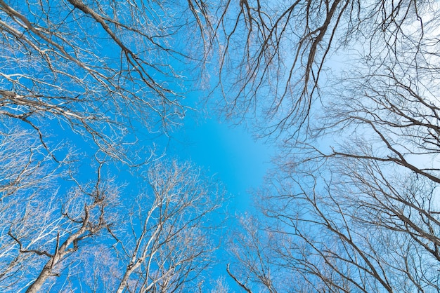 Top branches des arbres sur fond de ciel bleu