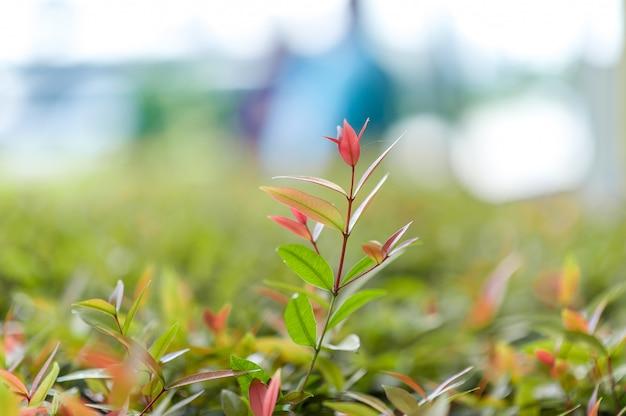 Top feuilles de thé vert de feuilles de thé douces idées de voyage nature avec espace de copie