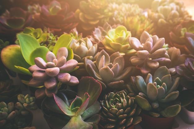 Top view diverses plantes succulentes fleurs de cactus
