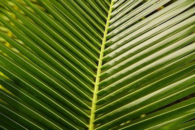 Topique, noix de coco, feuilles, vert, fond