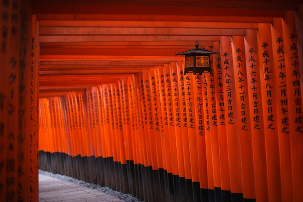 Torii au sanctuaire fushimi inari-taisha.
