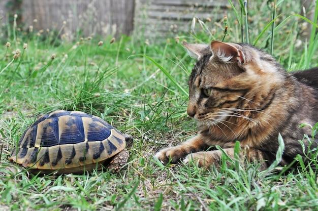 Tortue et chat jouant dans l'herbe