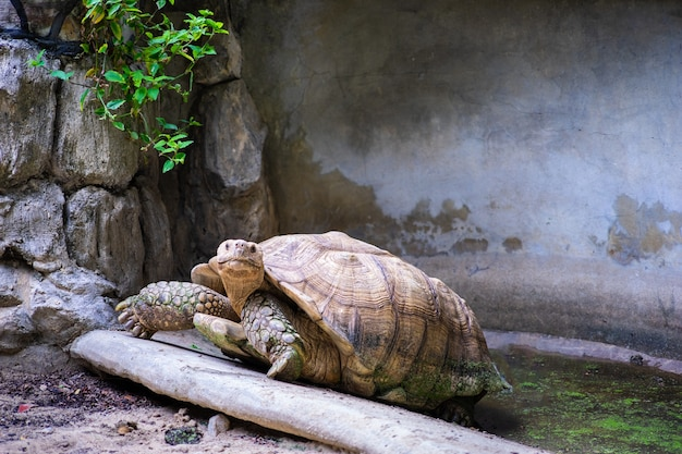 Les tortues rampent