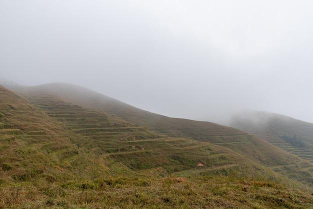 Tôt le matin, les arbres dans le brouillard des prairies