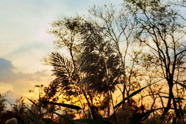 Tôt le matin, lever de soleil sur
