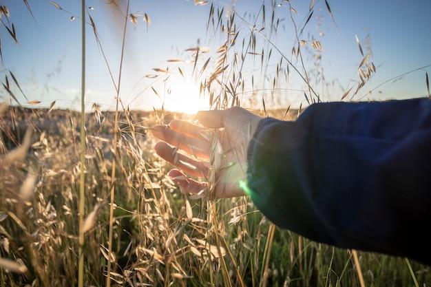Toucher des plantes dans la nature
