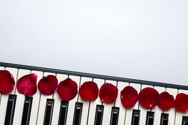Touches du piano avec des pétales de fleurs de rose rouge, isolées, vue de dessus, espace copie.