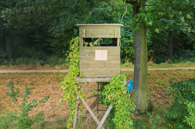 Tour d'observation en bois pour la chasse au fond des arbres en été
