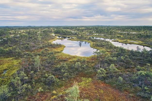 Tourbière surélevée, vue d'en haut. parc national de kemeri en lettonie.