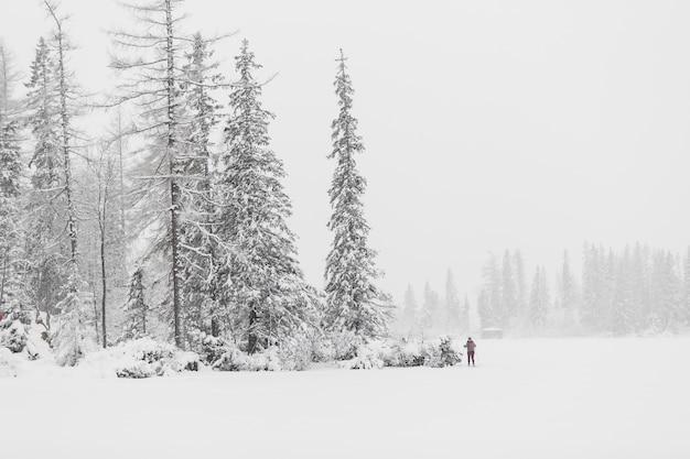 Touriste dans les bois d'hiver