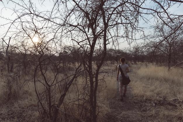 Touriste marchant dans la brousse et le bosquet d'acacia au coucher du soleil, bushmandland, namibie.