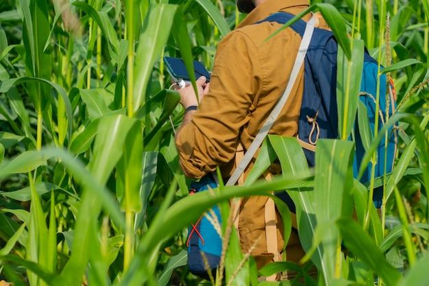 Le touriste tient un smartphone avec un chargeur portable dans ses mains. l'homme avec une banque d'alimentation charge le téléphone dans le contexte du champ de maïs.