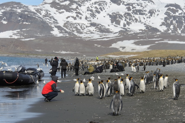 Touristes en antarctique