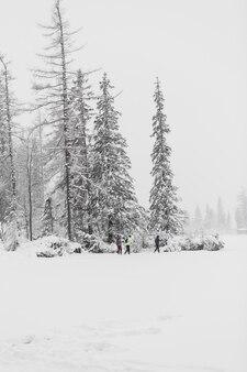 Touristes marchant dans la forêt d'hiver