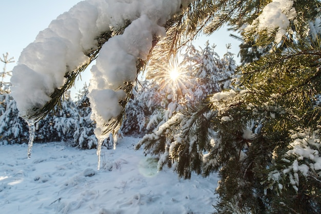 Les touristes marchent dans la forêt d'hiver
