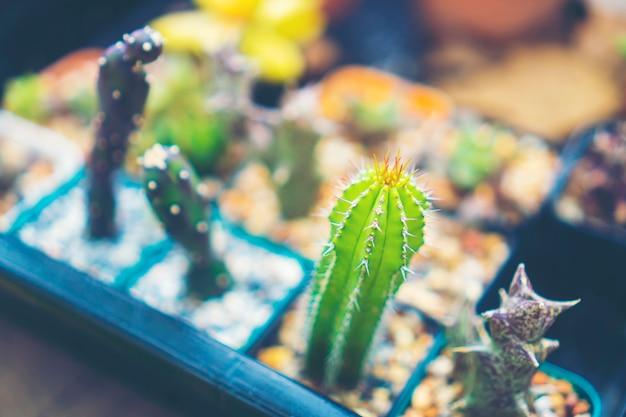 Tourné sur un cluster de cactus. espèces bien connues de cactus
