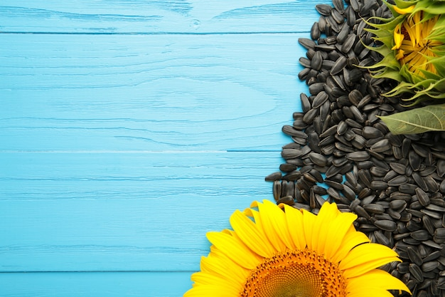 Tournesol avec graines sur fond bleu avec espace de copie. vue de dessus