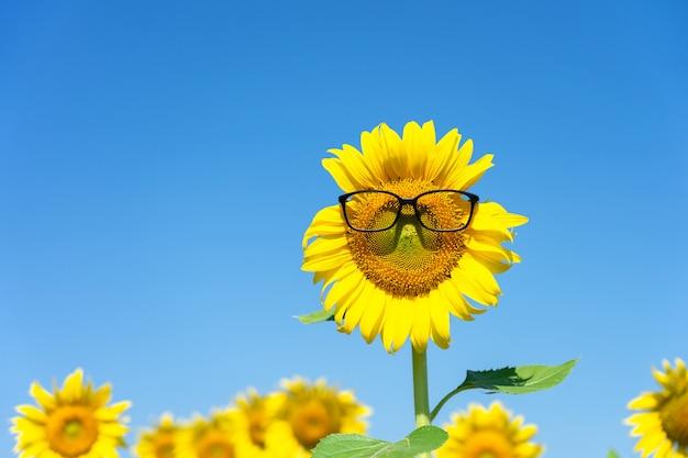 Tournesol (helianthus annuus) porter des lunettes noires. tournesol en fleurs