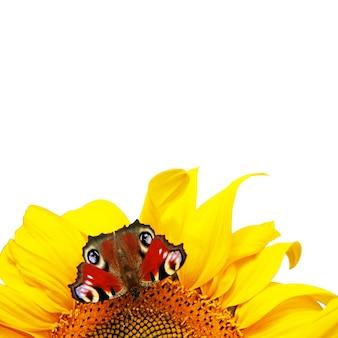 Tournesol jaune vif avec papillon sur un matin d'été ensoleillé.
