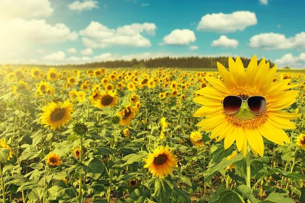 Tournesol portant des lunettes de soleil avec champ de tournesol sur ciel bleu nuageux et lumières du soleil