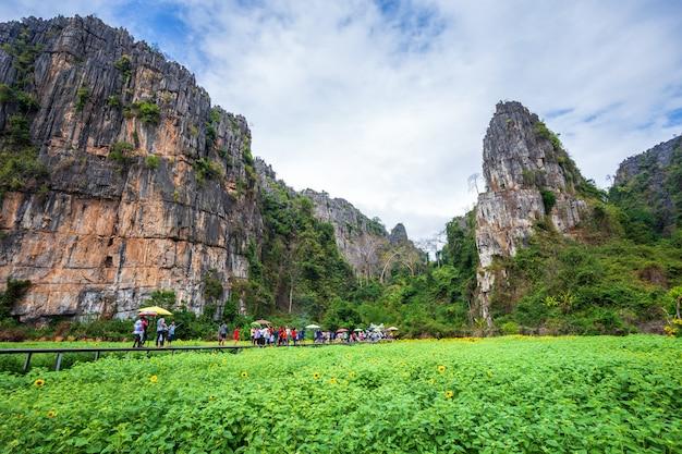 Tournesols dans les montagnes avec le ciel bleu dans le jardin à noen maprang phitsaunlok, thaïlande.