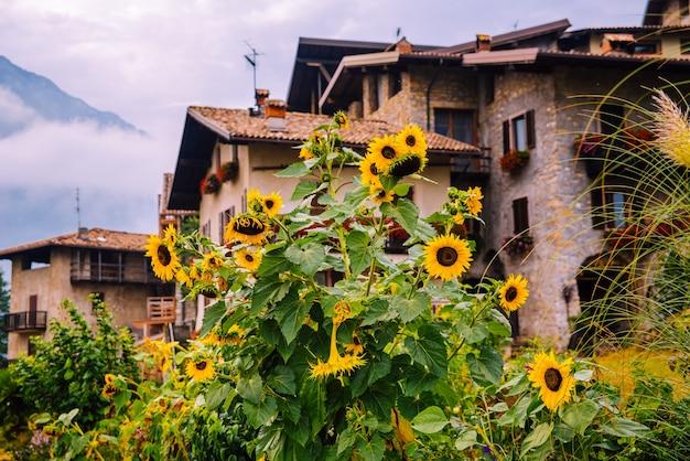 Des tournesols sauvages ornent un chemin de campagne dans les alpes italiennes, avec des maisons en pierre floues en arrière-plan.