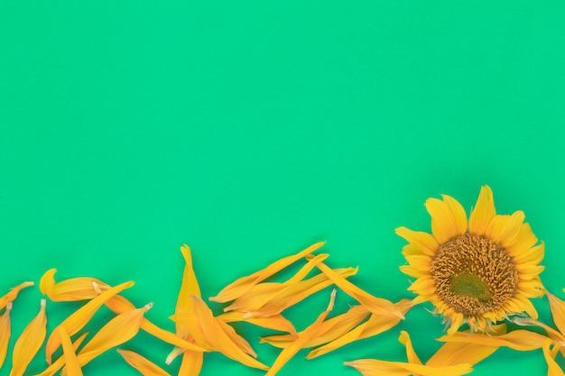 Les tournesols sont en fleurs sur le fond.