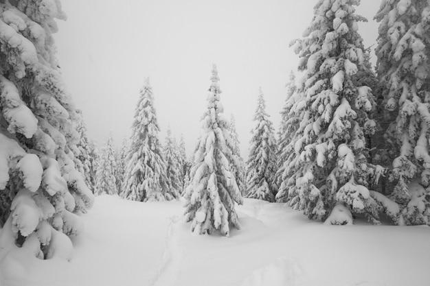 Tout est couvert de neige. arbres enneigés dans la forêt