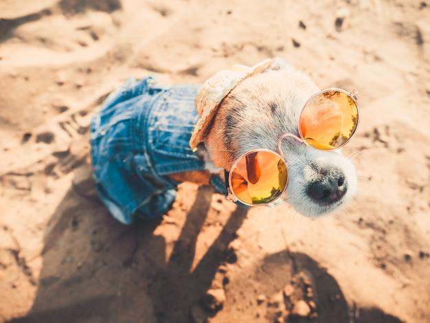 Un toutou chihuahua habillé à la mode repose dans la nature, regarde l'eau et jouit de la liberté