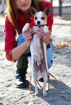 Toy terrier chiot chien dans des câlins de fille pendant la marche