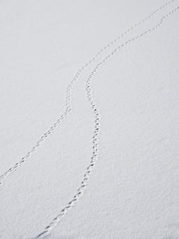 Une trace d'empreintes de pas dans la neige est une perspective de décoloration. traces d'oiseaux dans la neige
