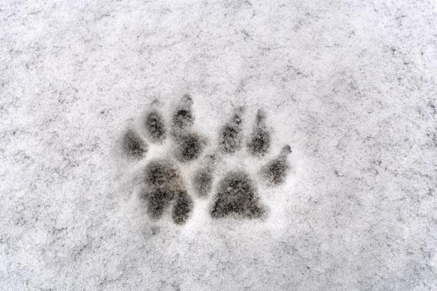 Traces de patte de chien sur neige fraîche fond blanc