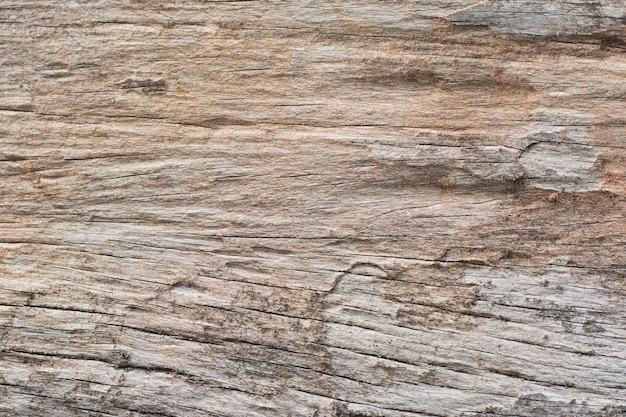 Des traces de termites mangent du bois