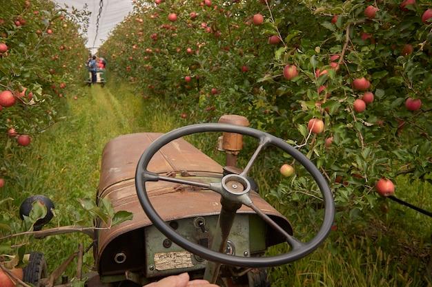 Tracteur agricole dans le verger pendant une journée de travail