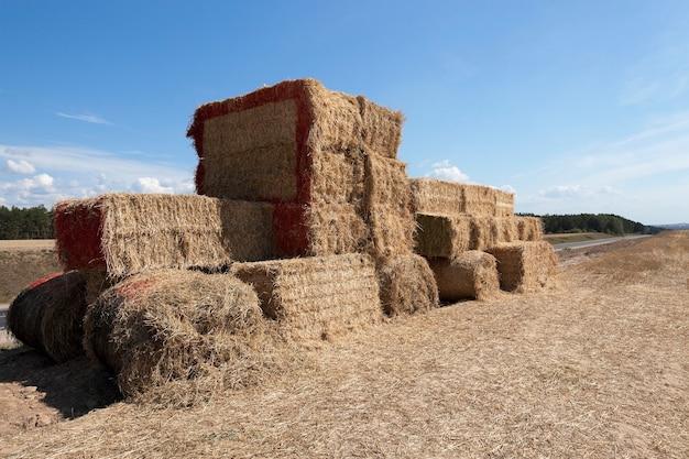 Tracteur photographié en gros plan fabriqué à partir de paille après la récolte, peint avec de la peinture