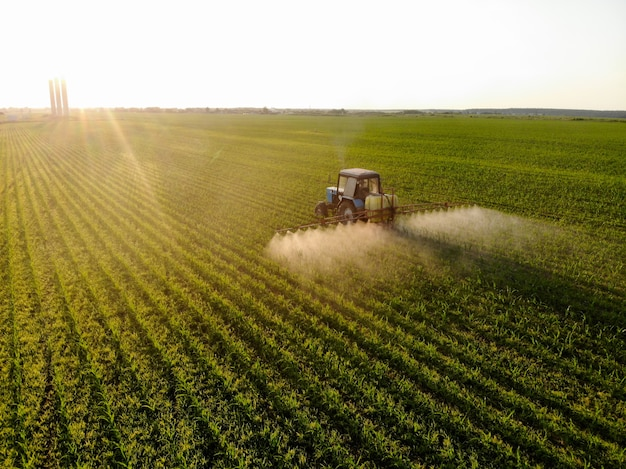 Le tracteur pulvérise des pesticides sur des champs de maïs au coucher du soleil