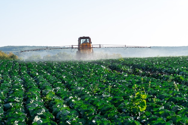 Le tracteur pulvérise des produits chimiques et des pesticides dans le champ d'une ferme avec des légumes