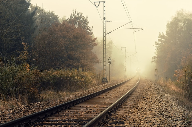 Train de chemin de fer entre les arbres verts pendant la journée